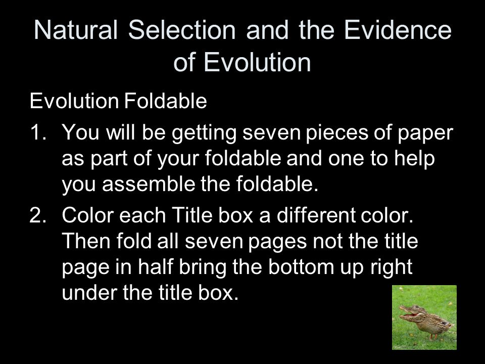 On each flap you should see: 1.Modern Theory of Evolution 2.Origins of Evolution 3.Natural Selection & Types 4.Influences of Evolution 5.Patterns of Evolution & Speciation 6.Evidences of Evolution 7.Evidences continued…