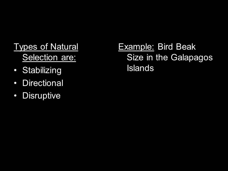 (Inside) On Bottom Half of 3rd Flap write: Glue in the following picture & Label the following: A) mode of natural selection in which a single phenotype is favored, causing the allele frequency to continuously shift in one direction B) Mode of natural selection in which genetic diversity decreases as the population stabilizes, selects against extreme values of the character and favors the intermediate variants C) extreme values for a trait are favored; the variance of the trait increases and the population is divided into two distinct groups