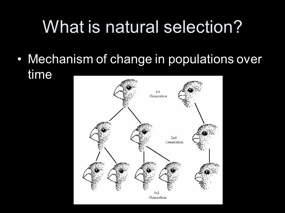 The process of natural selection… Occurs when organism with favorable variations survive, reproduce, and pass on their variations to the next generation Without these variations, organism is less likely to survive Each new generation thus consists largely of offspring with variations aiding their survival