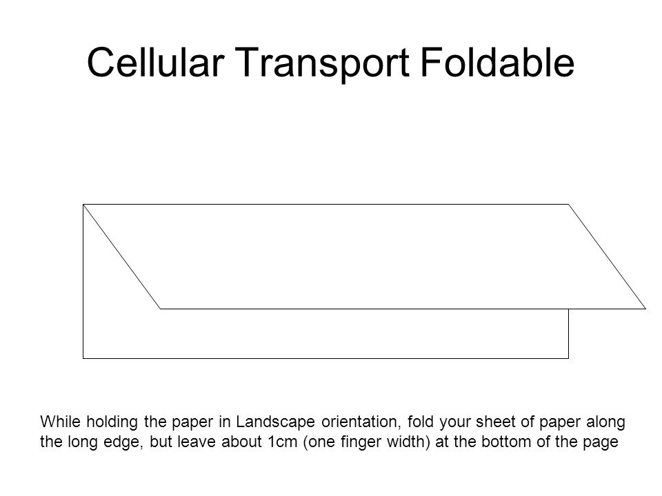 Cellular Transport Foldable While holding the paper in Landscape orientation, fold your sheet of paper along the long edge, but leave about 1cm (one f