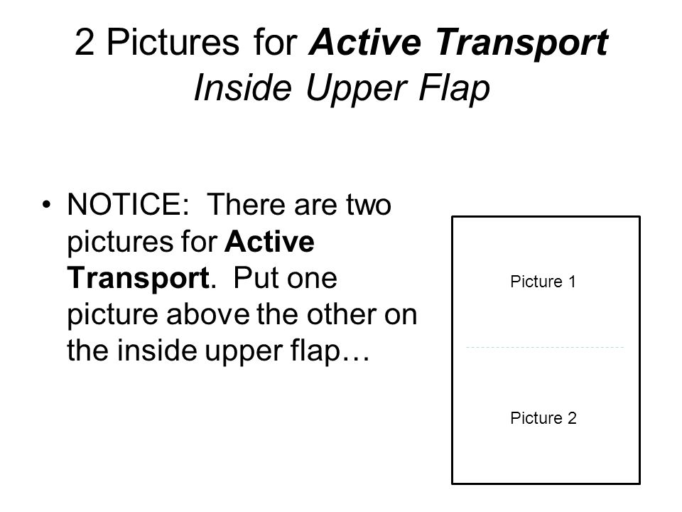 NOTICE: There are two pictures for Active Transport. Put one picture above the other on the inside upper flap… 2 Pictures for Active Transport Inside