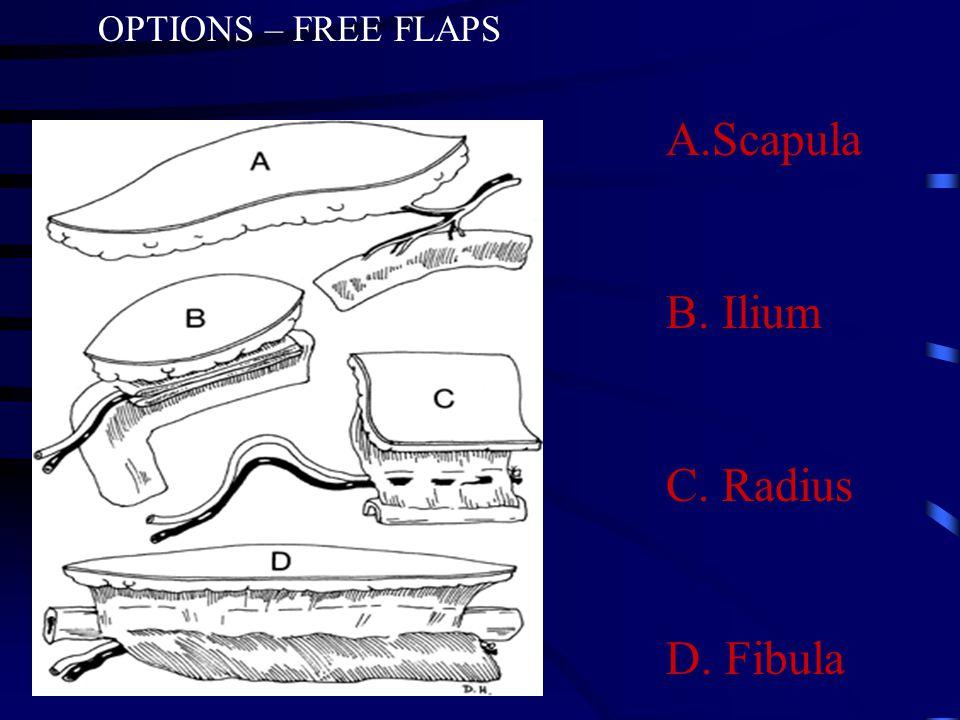 A.Scapula B. Ilium C. Radius D. Fibula OPTIONS – FREE FLAPS