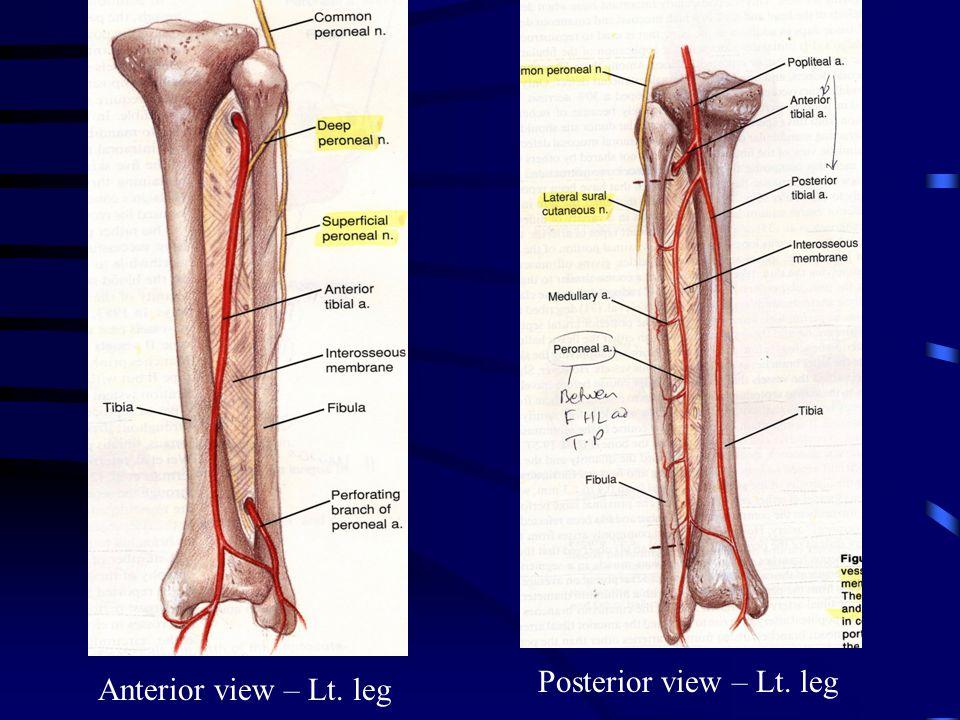 Anterior view – Lt. leg Posterior view – Lt. leg