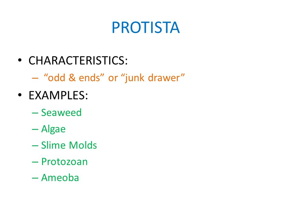 PROTISTA CHARACTERISTICS: – odd & ends or junk drawer EXAMPLES: – Seaweed – Algae – Slime Molds – Protozoan – Ameoba