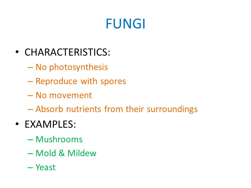 FUNGI CHARACTERISTICS: – No photosynthesis – Reproduce with spores – No movement – Absorb nutrients from their surroundings EXAMPLES: – Mushrooms – Mold & Mildew – Yeast