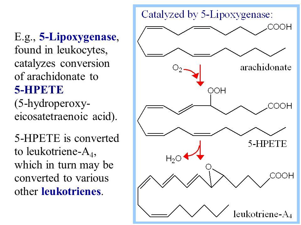 E.g., 5-Lipoxygenase, found in leukocytes, catalyzes conversion of arachidonate to 5-HPETE (5-hydroperoxy- eicosatetraenoic acid). 5-HPETE is converte