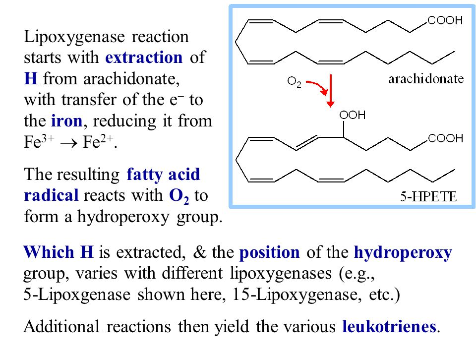 Lipoxygenase reaction starts with extraction of H from arachidonate, with transfer of the e  to the iron, reducing it from Fe 3+  Fe 2+.