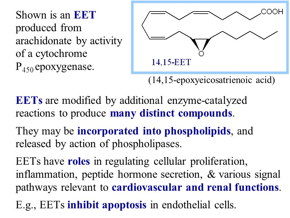 EETs are modified by additional enzyme-catalyzed reactions to produce many distinct compounds.