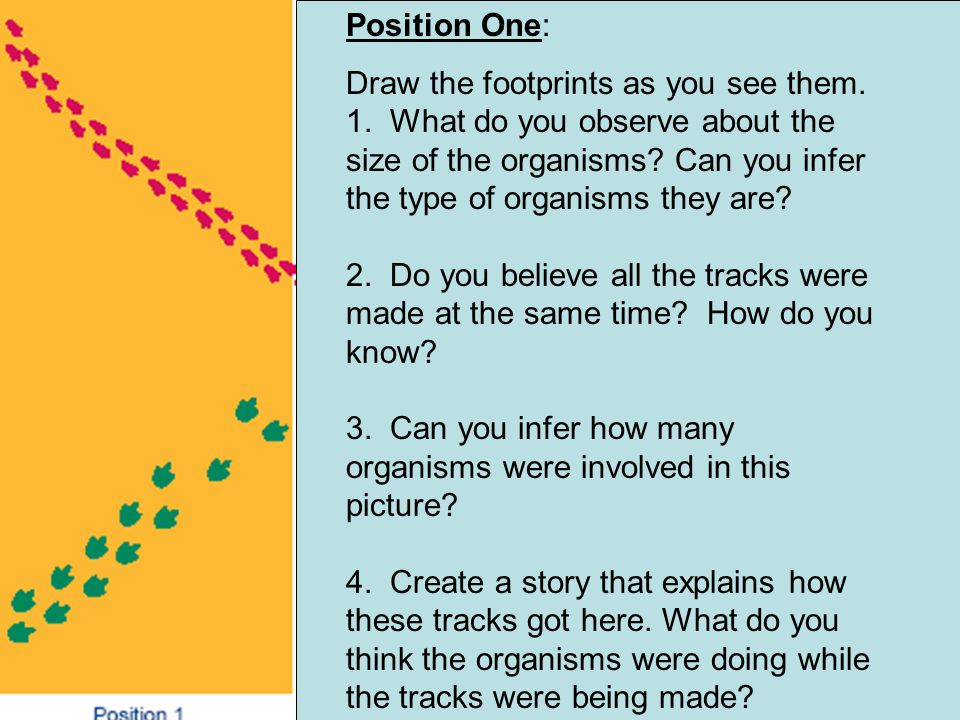 Position One: Draw the footprints as you see them. 1. What do you observe about the size of the organisms? Can you infer the type of organisms they ar