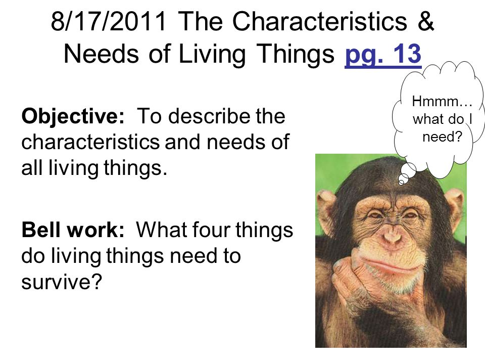 8/17/2011 The Characteristics & Needs of Living Things pg. 13 Objective: To describe the characteristics and needs of all living things. Bell work: Wh