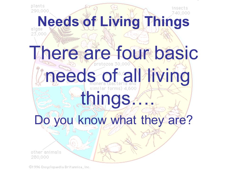 Needs of Living Things There are four basic needs of all living things…. Do you know what they are?