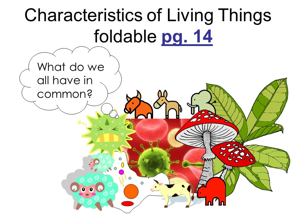 Characteristics of Living Things foldable pg. 14 What do we all have in common?