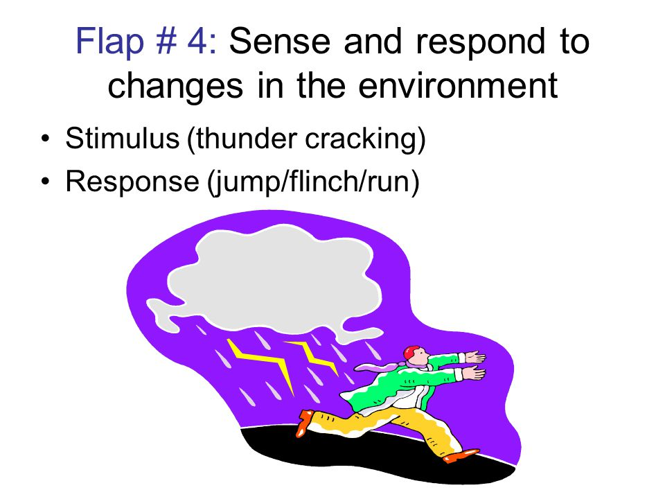 Flap # 4: Sense and respond to changes in the environment Stimulus (thunder cracking) Response (jump/flinch/run)