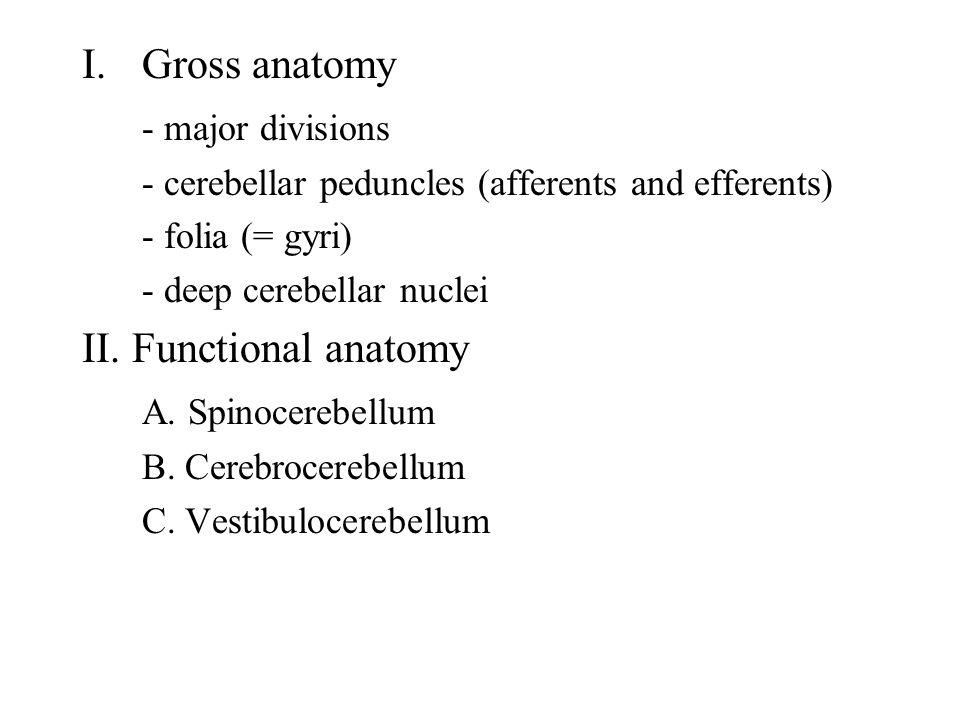 I.Gross anatomy - major divisions - cerebellar peduncles (afferents and efferents) - folia (= gyri) - deep cerebellar nuclei II. Functional anatomy A.