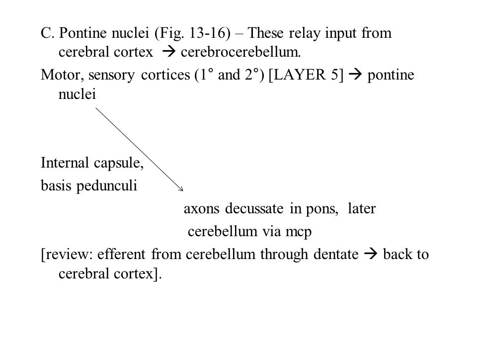 C. Pontine nuclei (Fig. 13-16) – These relay input from cerebral cortex  cerebrocerebellum. Motor, sensory cortices (1° and 2°) [LAYER 5]  pontine n