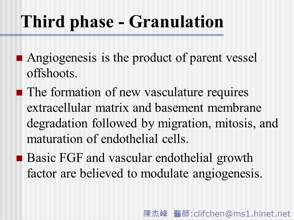 陳杰峰 醫師 :clifchen@ms1.hinet.net Third phase - Granulation Angiogenesis is the product of parent vessel offshoots.
