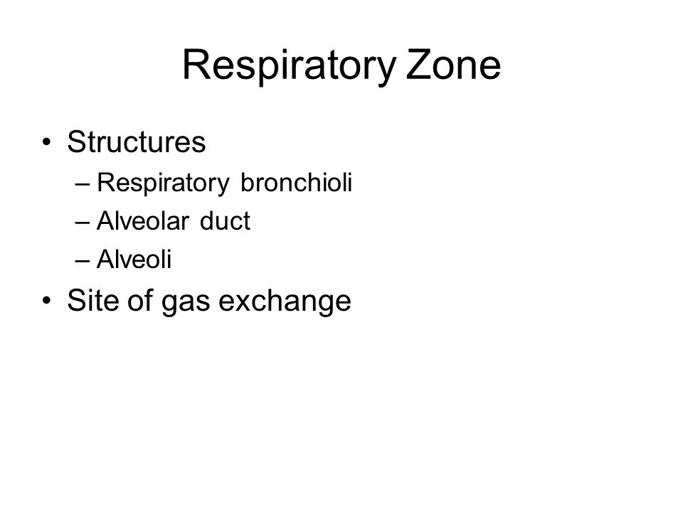 Respiratory Zone Structures –Respiratory bronchioli –Alveolar duct –Alveoli Site of gas exchange