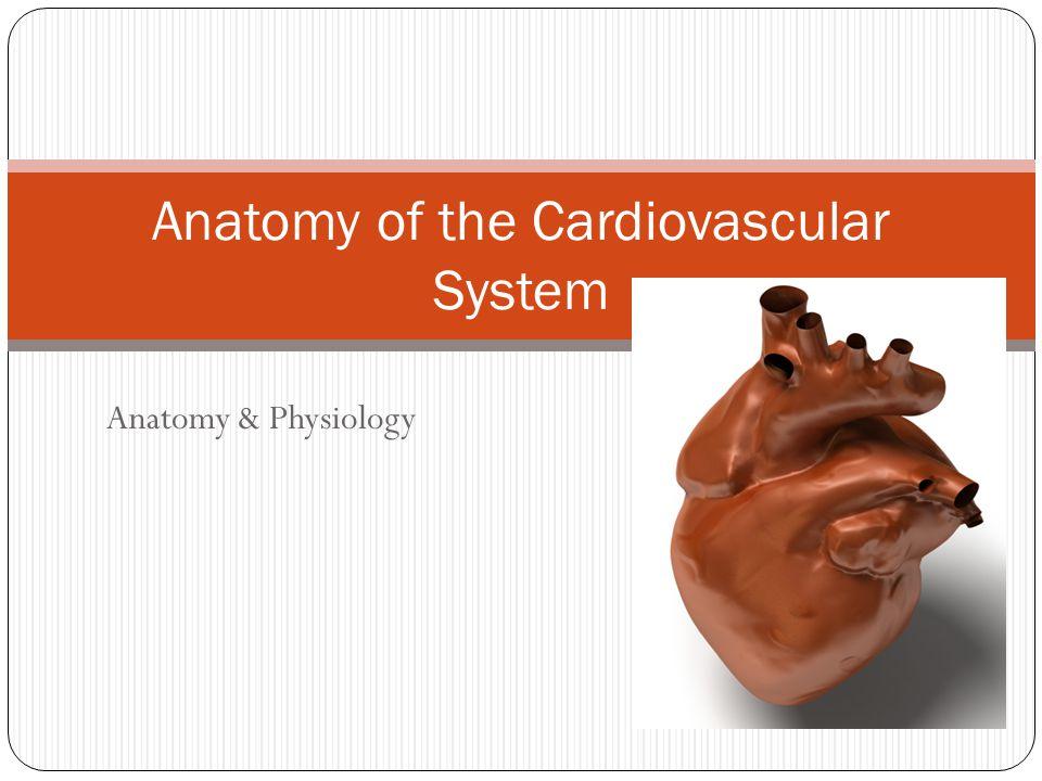 Anatomy & Physiology Anatomy of the Cardiovascular System