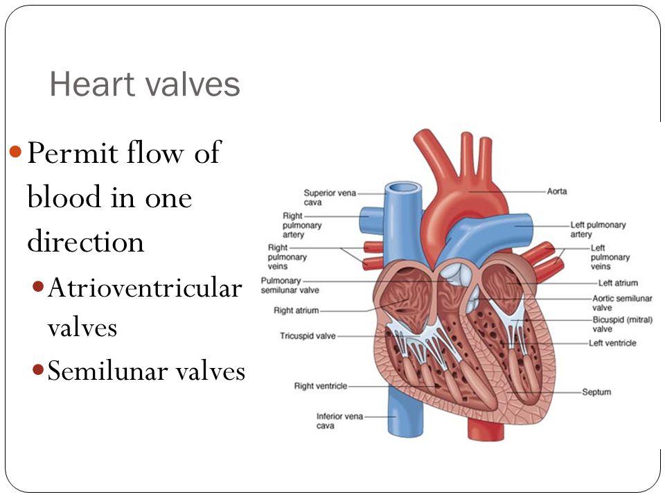 Heart valves Permit flow of blood in one direction Atrioventricular valves Semilunar valves