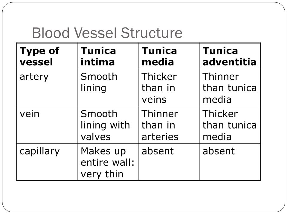 Blood Vessel Structure Type of vessel Tunica intima Tunica media Tunica adventitia arterySmooth lining Thicker than in veins Thinner than tunica media