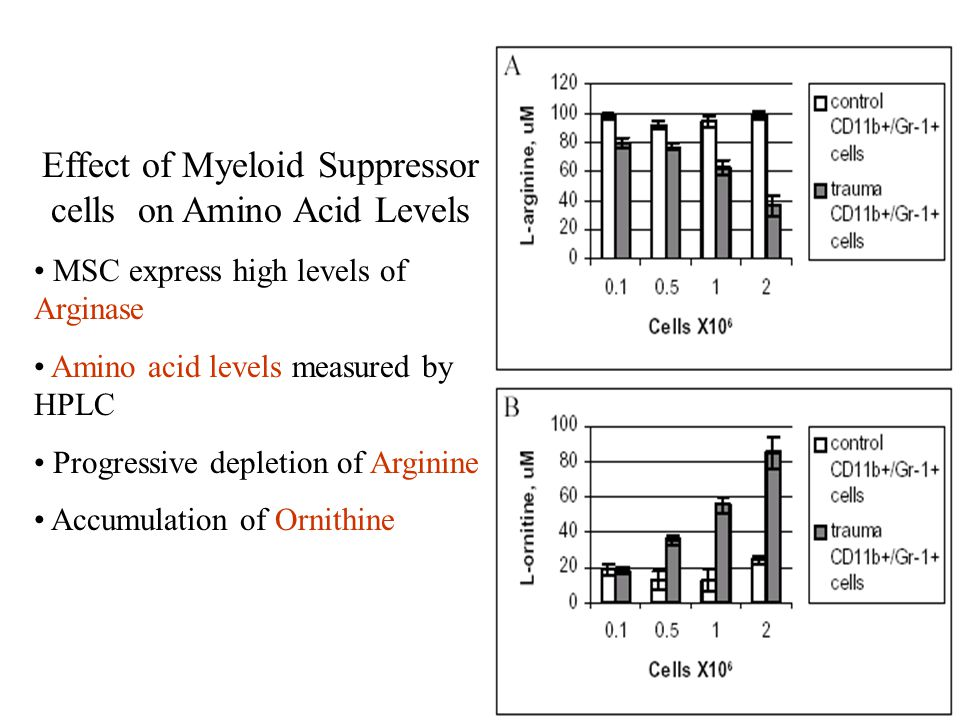 Effect of Myeloid Suppressor cells on Amino Acid Levels MSC express high levels of Arginase Amino acid levels measured by HPLC Progressive depletion o