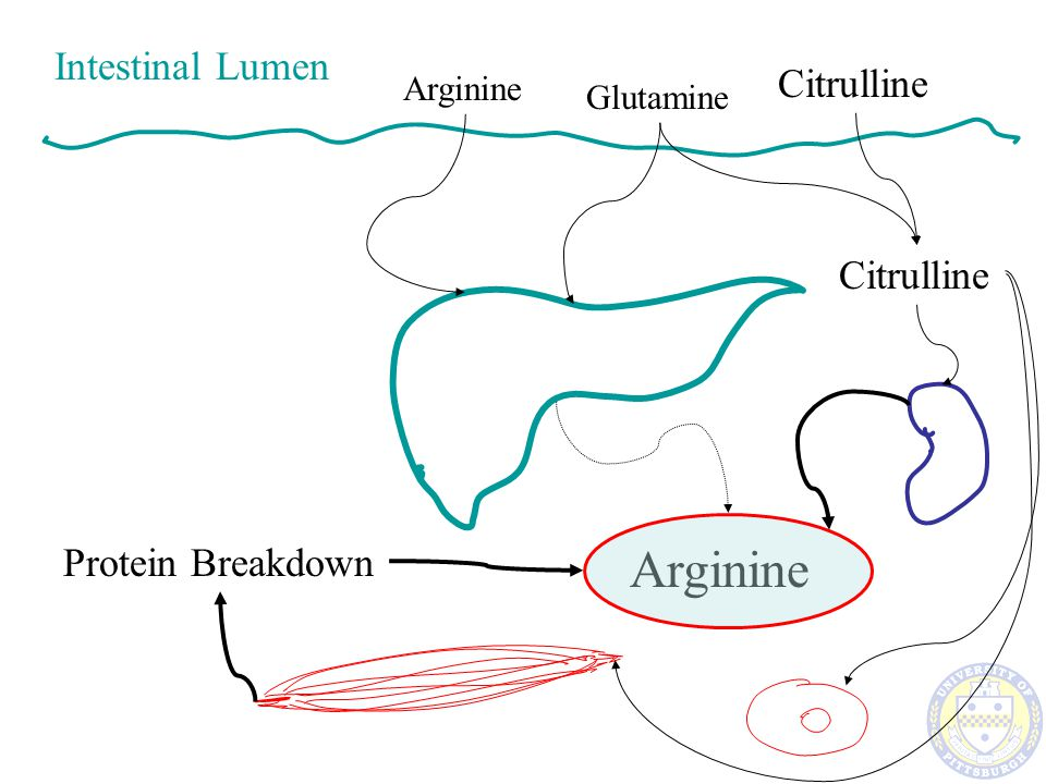 Arginase 1 is increased after Trauma ARG 1