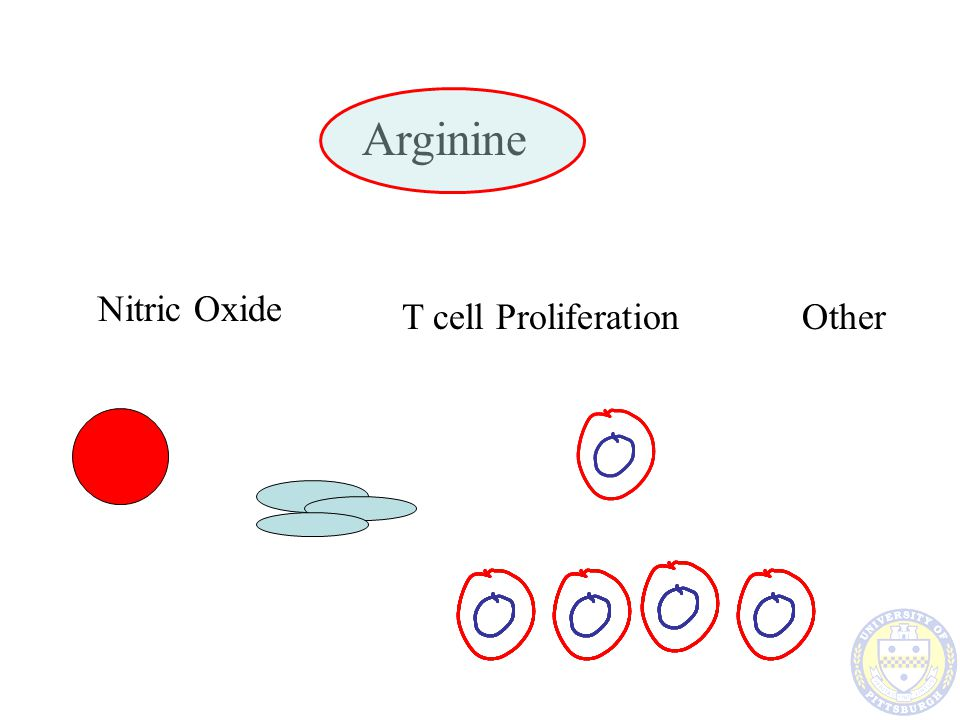 Arginine - Vasodilation Nitric oxide Generated by a –CONSTITUTIVE ENZYME Very small quantities Substrate Dependent –The more arginine, the more vasodilation Better Organ Perfusion –More tolerance to low flow states - SHOCK