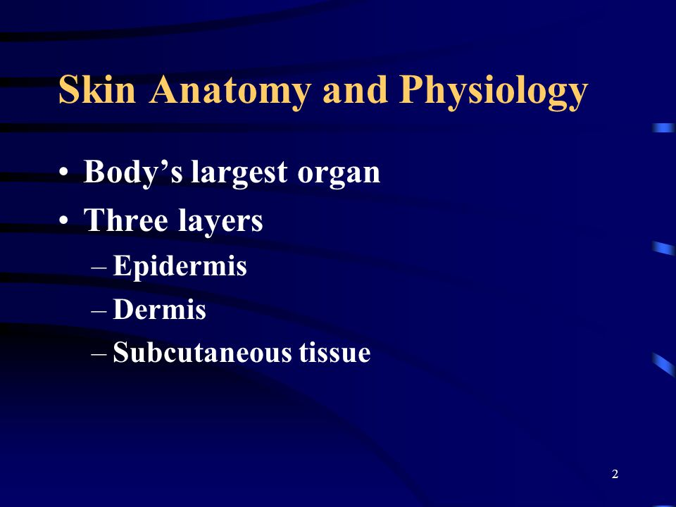 2 Skin Anatomy and Physiology Body's largest organ Three layers –Epidermis –Dermis –Subcutaneous tissue