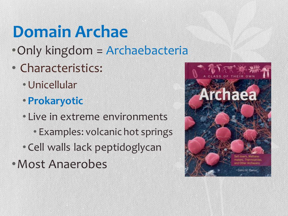 Domain Archae Only kingdom = Archaebacteria Characteristics: Unicellular Prokaryotic Live in extreme environments Examples: volcanic hot springs Cell walls lack peptidoglycan Most Anaerobes
