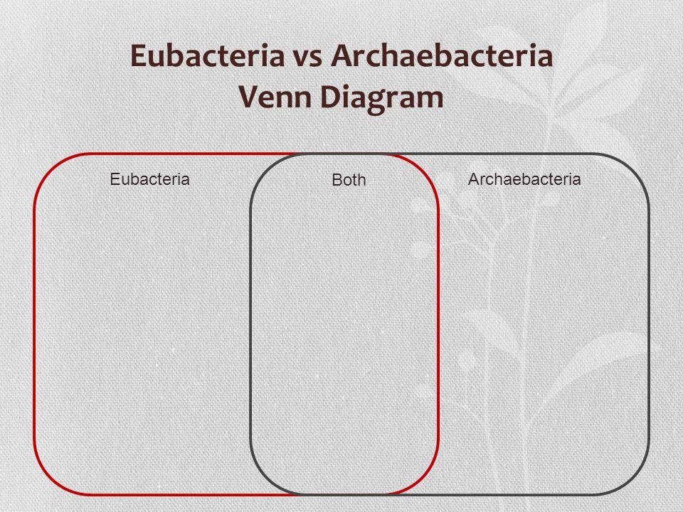 Eubacteria vs Archaebacteria Venn Diagram EubacteriaArchaebacteria Both