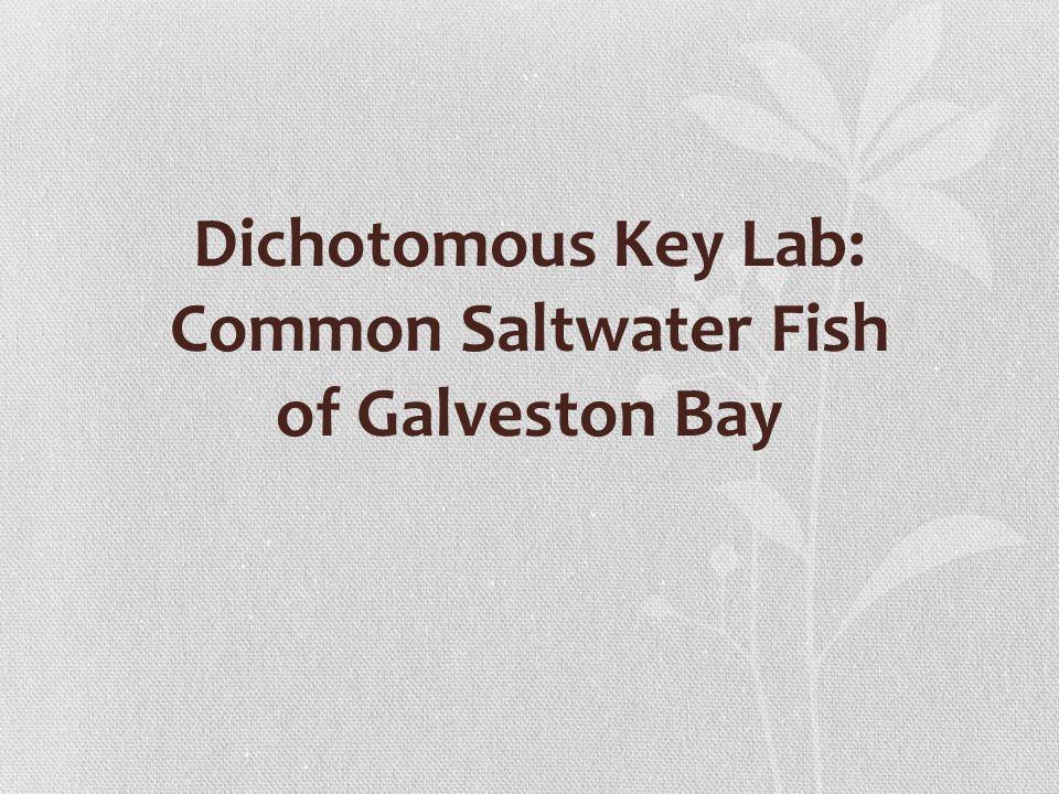 Dichotomous Key Lab: Common Saltwater Fish of Galveston Bay