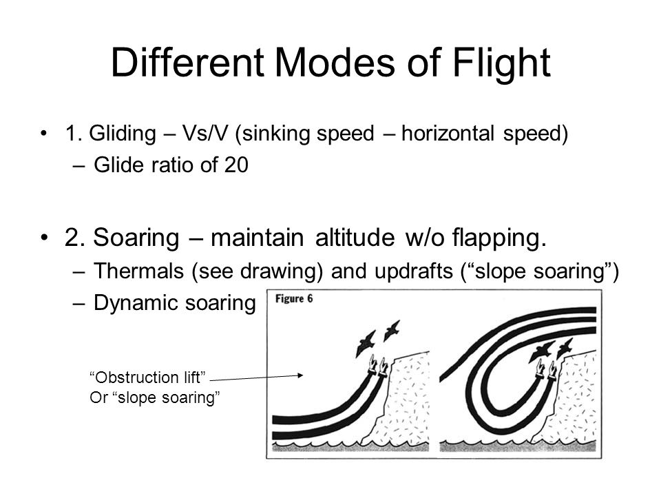 Different Modes of Flight 1.