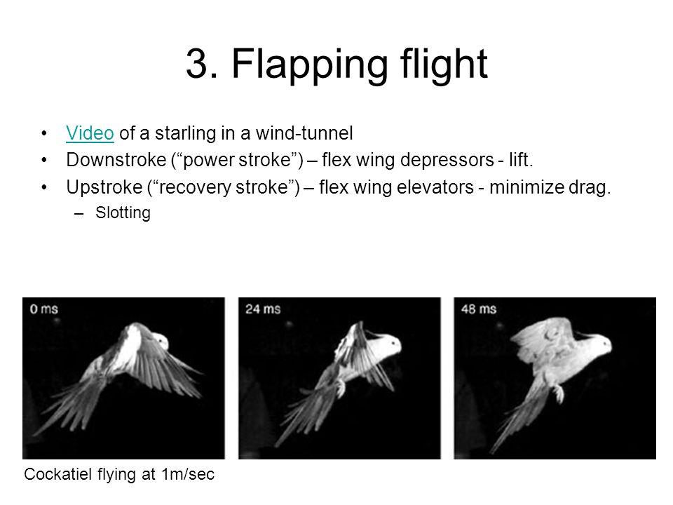 "3. Flapping flight Video of a starling in a wind-tunnelVideo Downstroke (""power stroke"") – flex wing depressors - lift. Upstroke (""recovery stroke"") –"
