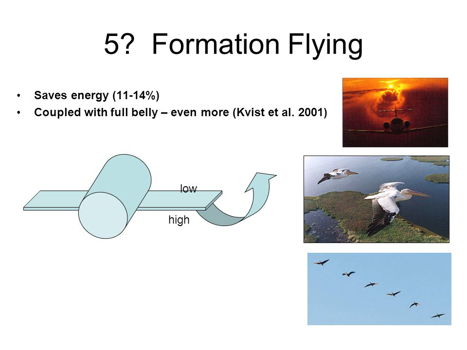 5? Formation Flying high low Saves energy (11-14%) Coupled with full belly – even more (Kvist et al. 2001)