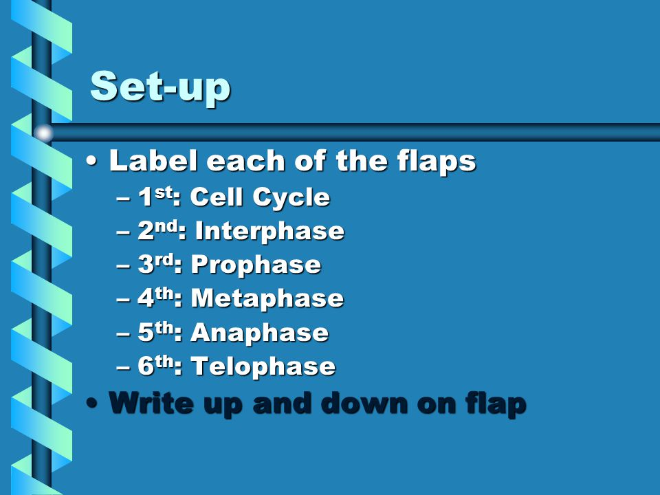 Set-up Label each of the flapsLabel each of the flaps –1 st : Cell Cycle –2 nd : Interphase –3 rd : Prophase –4 th : Metaphase –5 th : Anaphase –6 th : Telophase Write up and down on flapWrite up and down on flap