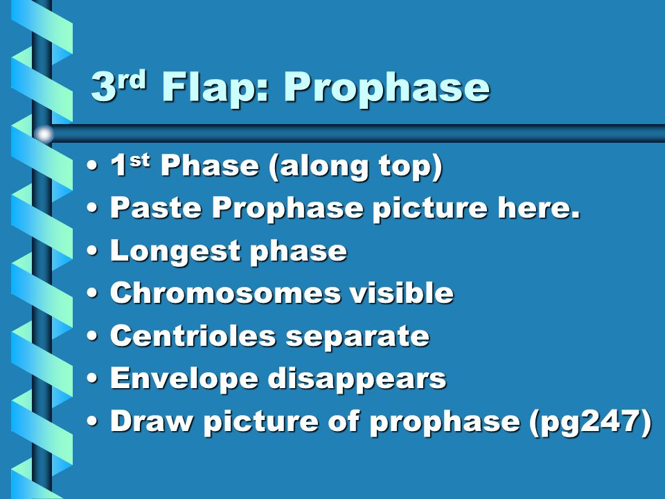 3 rd Flap: Prophase 1 st Phase (along top)1 st Phase (along top) Paste Prophase picture here.Paste Prophase picture here.
