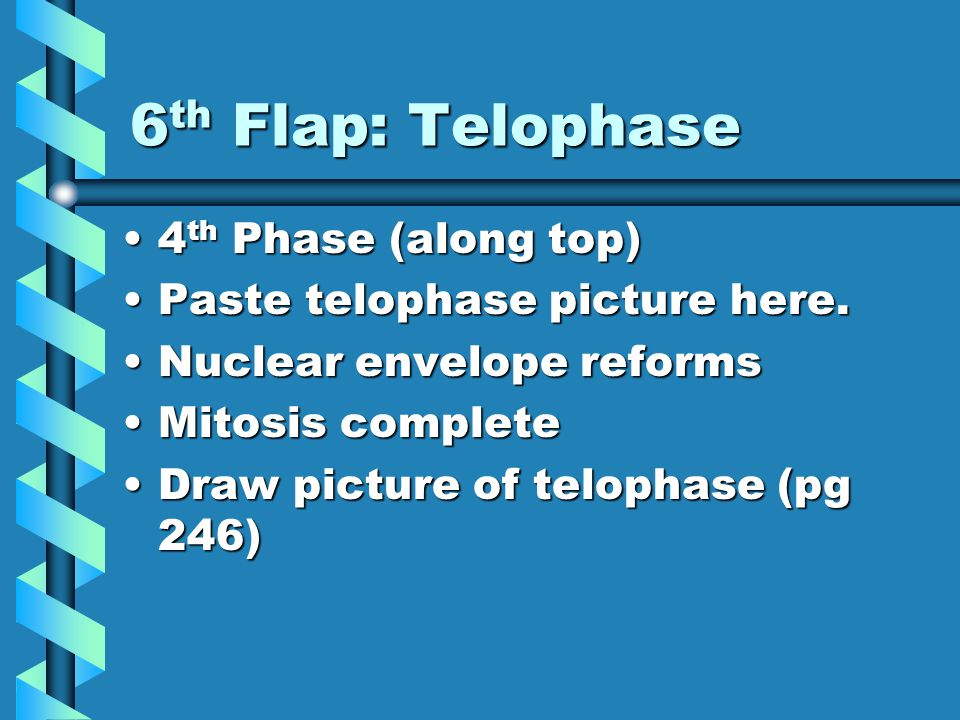 6 th Flap: Telophase 4 th Phase (along top)4 th Phase (along top) Paste telophase picture here.Paste telophase picture here.