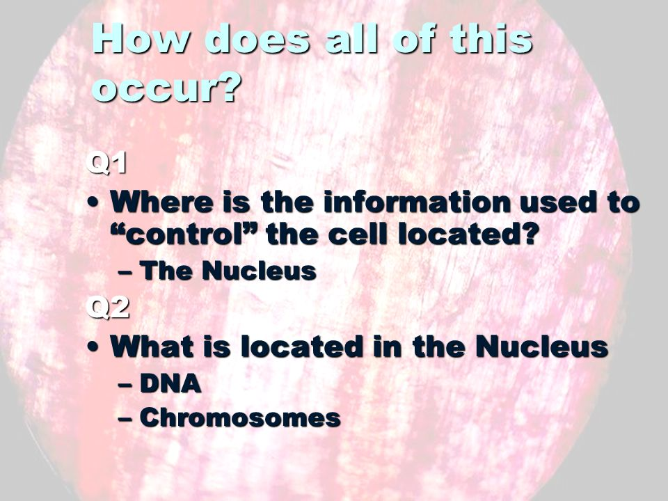 What is inside the Nucleus The nucleus contains DNAThe nucleus contains DNA –The cells instrument book DNA is packaged into structures called chromosomesDNA is packaged into structures called chromosomes Before cell reproduction, it must copy the chromosomesBefore cell reproduction, it must copy the chromosomes –This copy must be accurate WHY?