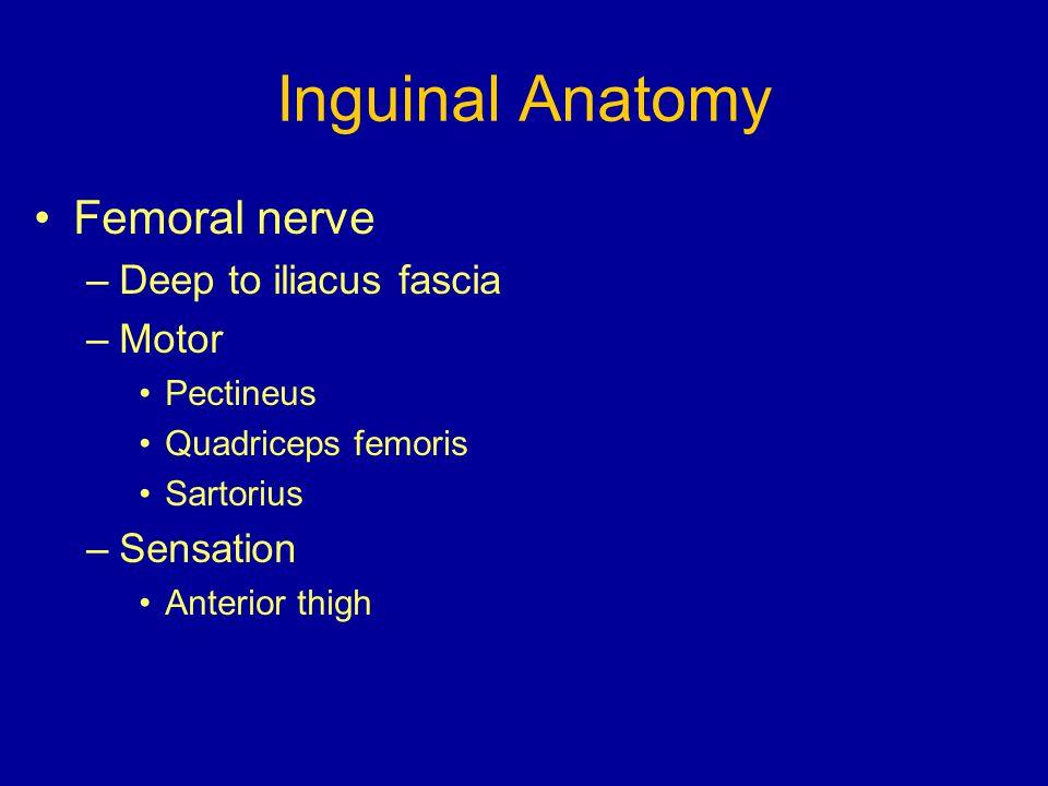 Inguinal Anatomy Femoral nerve –Deep to iliacus fascia –Motor Pectineus Quadriceps femoris Sartorius –Sensation Anterior thigh