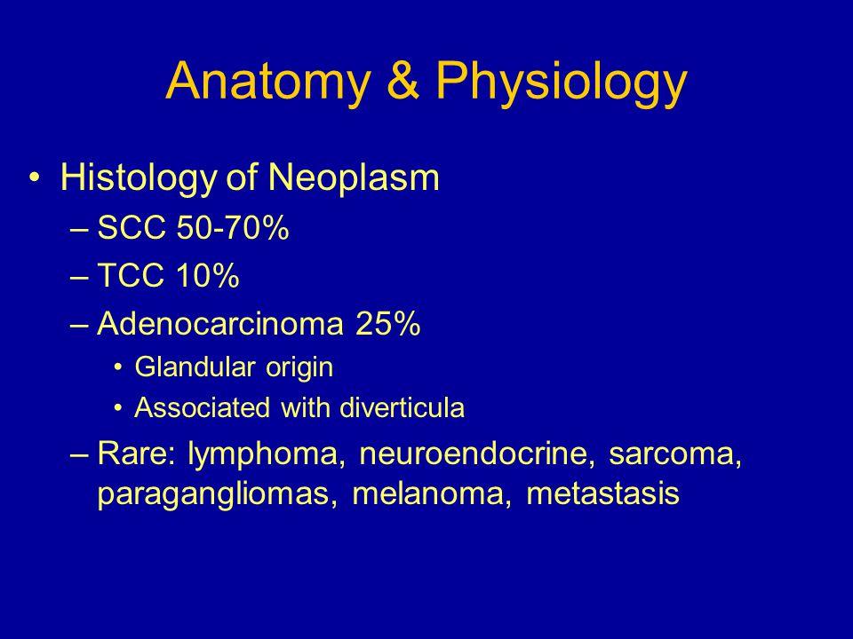 Anatomy & Physiology Histology of Neoplasm –SCC 50-70% –TCC 10% –Adenocarcinoma 25% Glandular origin Associated with diverticula –Rare: lymphoma, neur
