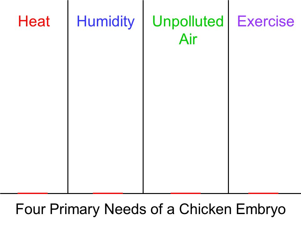 Four Primary Needs of a Chicken Embryo HeatHumidityUnpolluted Air Exercise