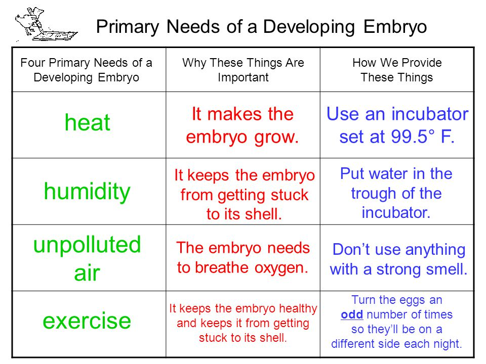 Primary Needs of a Developing Embryo Four Primary Needs of a Developing Embryo Why These Things Are Important How We Provide These Things heat It makes the embryo grow.