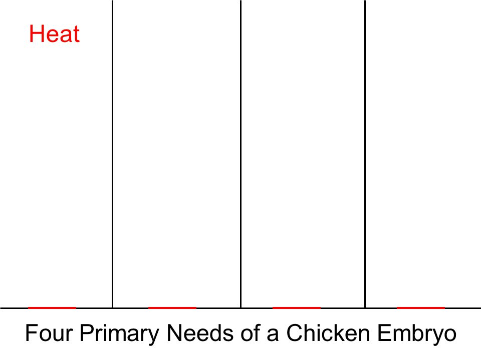 Four Primary Needs of a Chicken Embryo Heat