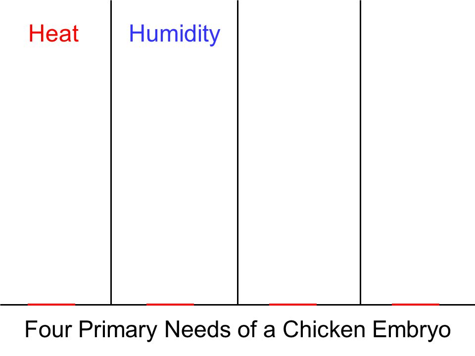 Four Primary Needs of a Chicken Embryo HeatHumidity