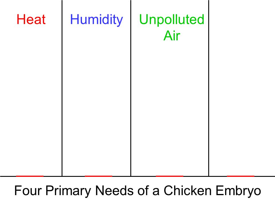 Four Primary Needs of a Chicken Embryo HeatHumidityUnpolluted Air