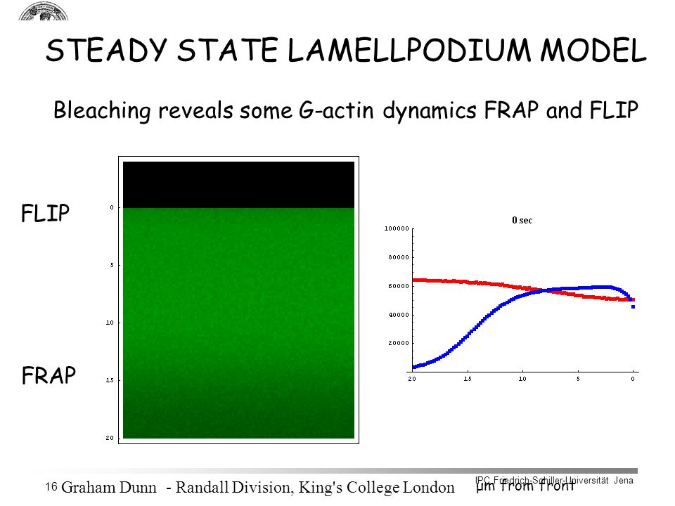 IPC Friedrich-Schiller-Universität Jena 16 STEADY STATE LAMELLPODIUM MODEL Bleaching reveals some G-actin dynamics FRAP and FLIP FLIP FRAP μm from front G-actin F-actin Graham Dunn - Randall Division, King s College London