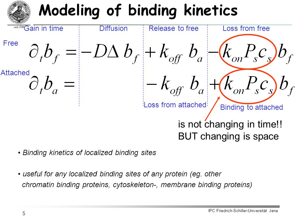 IPC Friedrich-Schiller-Universität Jena 5 Modeling of binding kinetics is not changing in time!.
