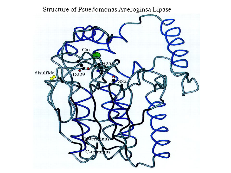 Structure of Psuedomonas Aueroginsa Lipase