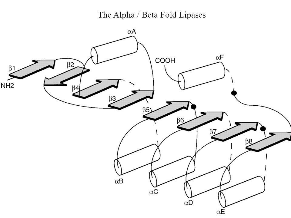 The Alpha / Beta Fold Lipases