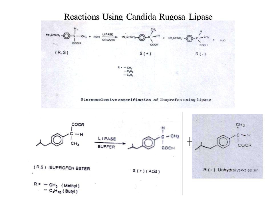 Reactions Using Candida Rugosa Lipase